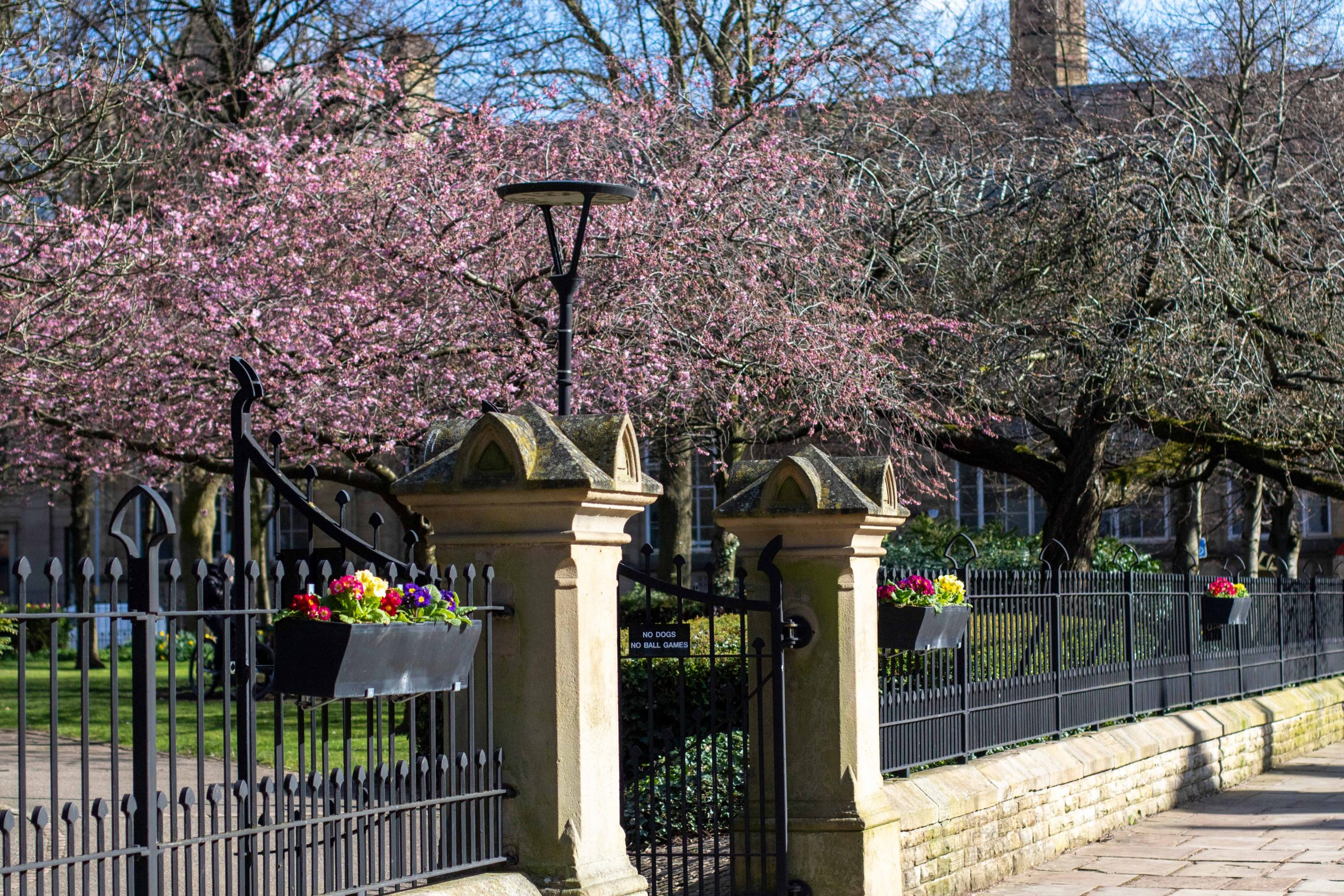 Flowers in bloom at All Saints Park one of the green spaces on Oxford Road Corridor