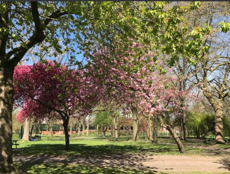 Trees in bloom at Whitworth Park Manchester Oxford Road Corridor taken by Friends of Whitworth Art Gallery