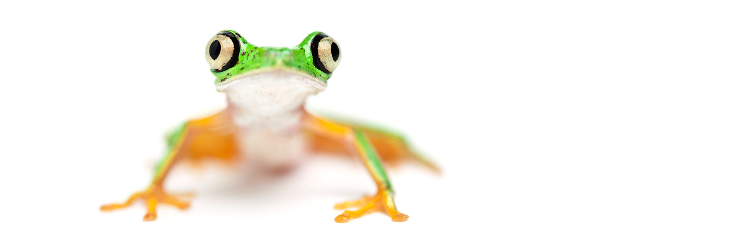 Frogs at Manchester Museums Vivarium which will be a part of this year's University of Manchester Community Festival